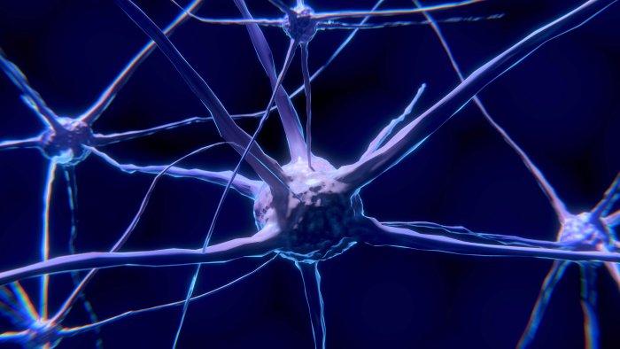 Gehirnzellen